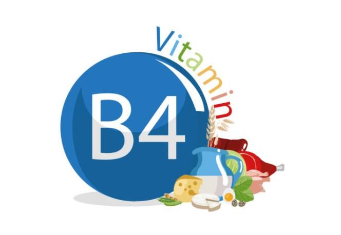 Холин (витамин B4)