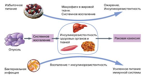инсулинорезистентность повышается при разовом избытке калорий