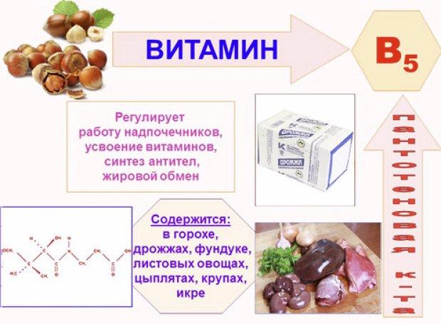 Источники и свойства витамина B5 (пантотеновая кислота)