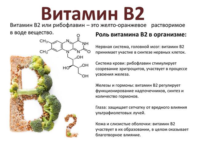 Роль витамина В2 (рибофлавина)