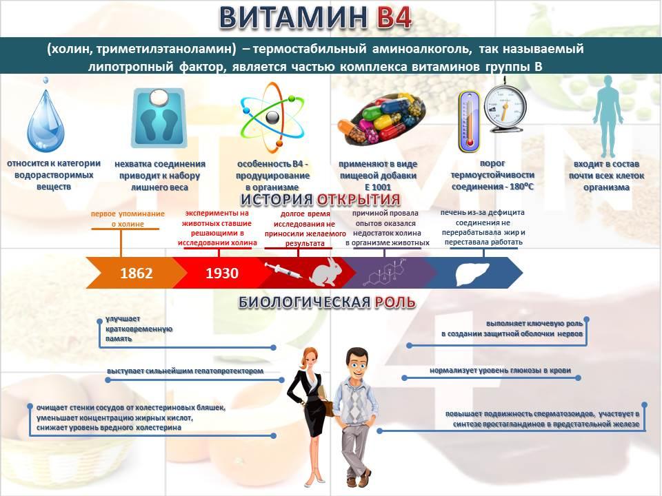 Витамин B4 инфографика