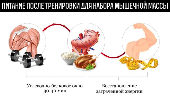Белковая диета после тренировки