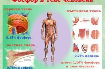 Функции фосфора в организме