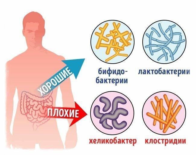 Кишечный микробиом