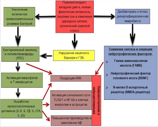 Связь между микробиомом и заболеваниями, старением